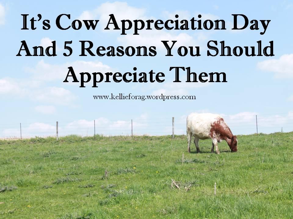 CowAppreciationBlog