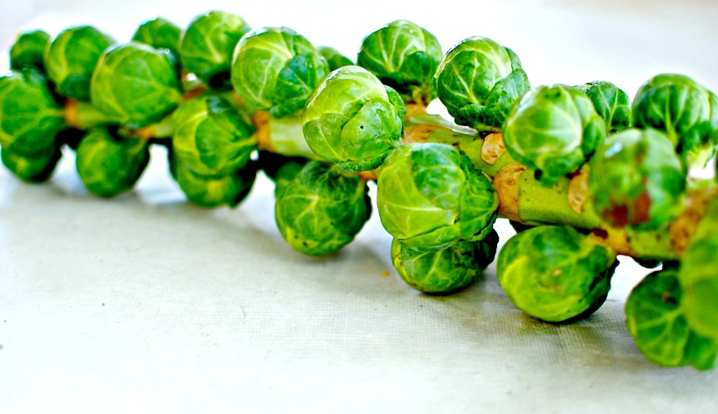 Brussels sprouts stalk