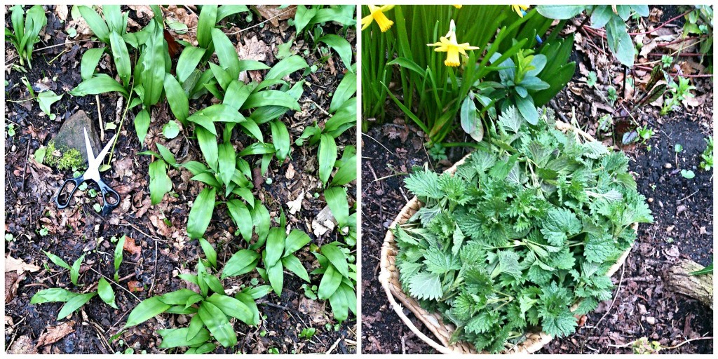 Wild Garlic (left) & Young Nettle Tops (right)