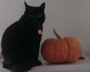 Shadow with pumpkin