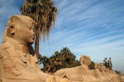 Avenue of the Sphynx