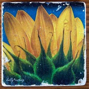 Sunflower Sunrise Coaster by Kelly Cushing