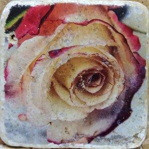 White Rose 3 Coaster by Kelly Cushing