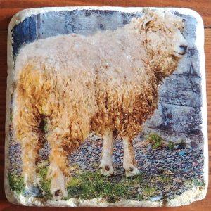 Cape Breton Sheep Coaster by Kelly Cushing