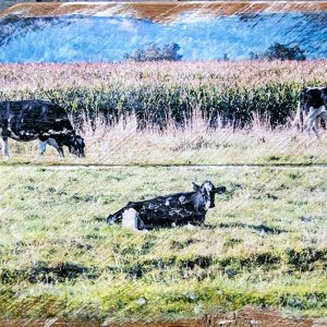 Cows in Field Wall Decor by Kelly Cushing