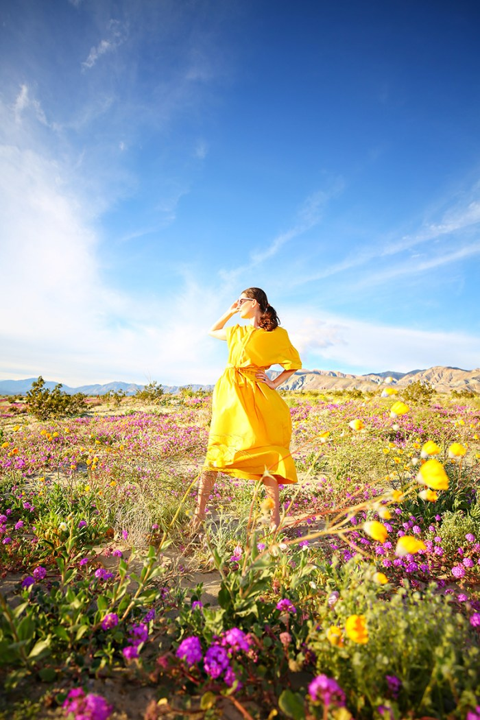 Where to see the California Super Bloom | Kelly Golightly