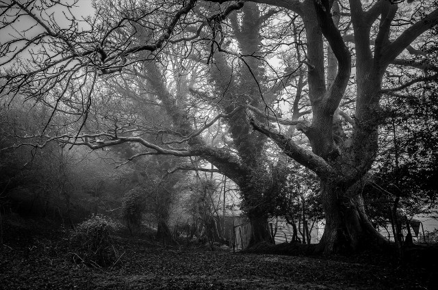 black & white trees and shed
