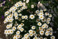 July_flowers_008_2