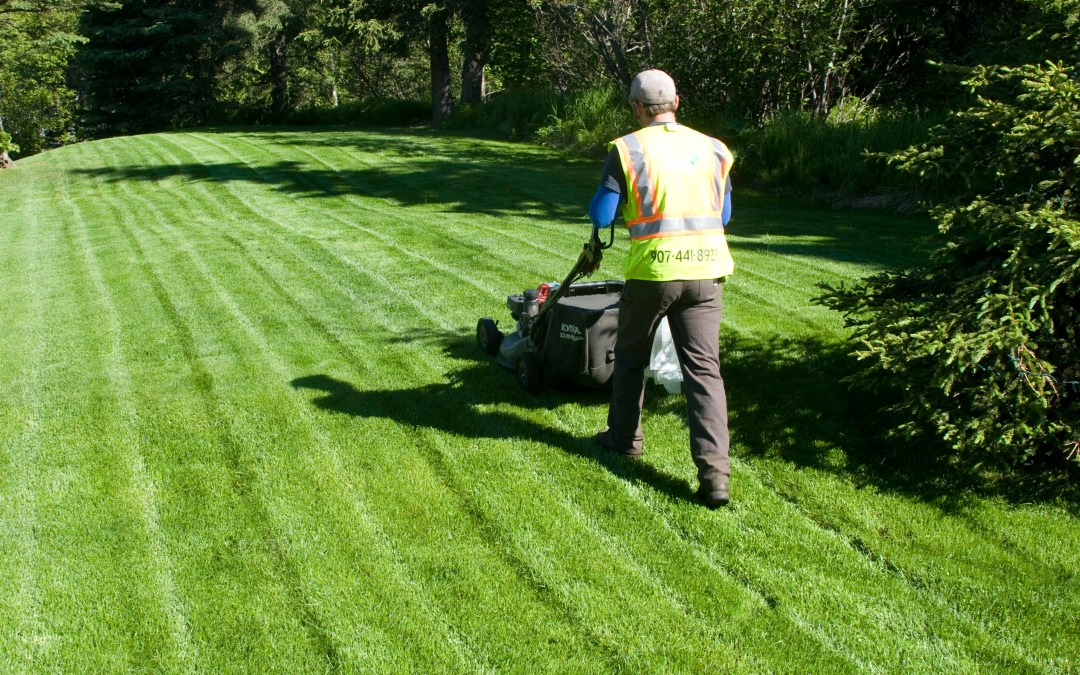 Why Your Yard Needs Spring Lawn Care Service
