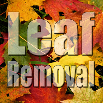 3 Reasons To Hire A Professional Lawn Care Service To Clean Up Your Leaves