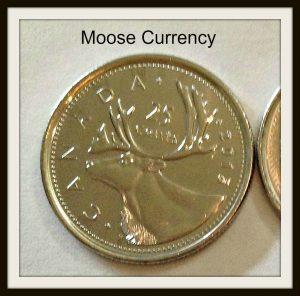 moose quarter