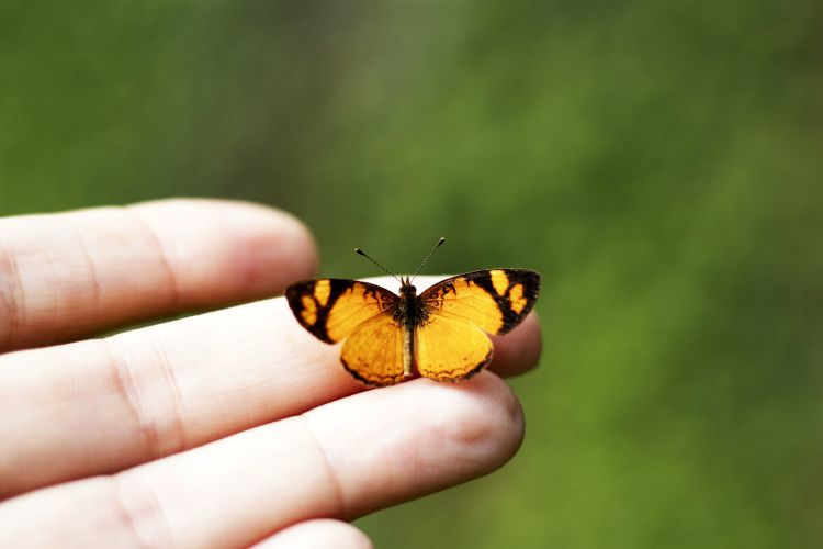 butterfly change transformation