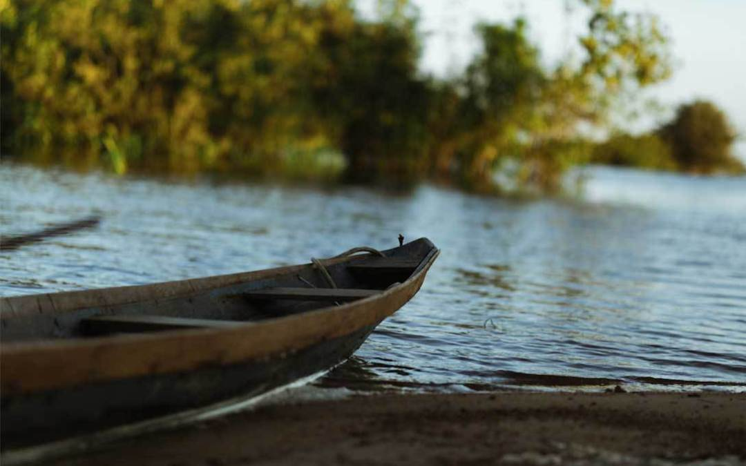A Big Fish Story From The Amazon