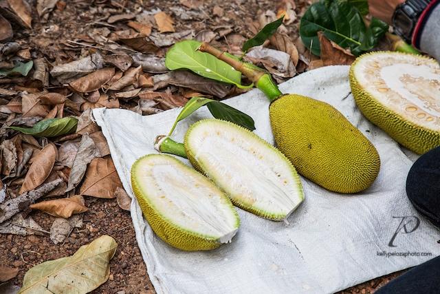 2016-thailand-jackfruit-farm-10-web