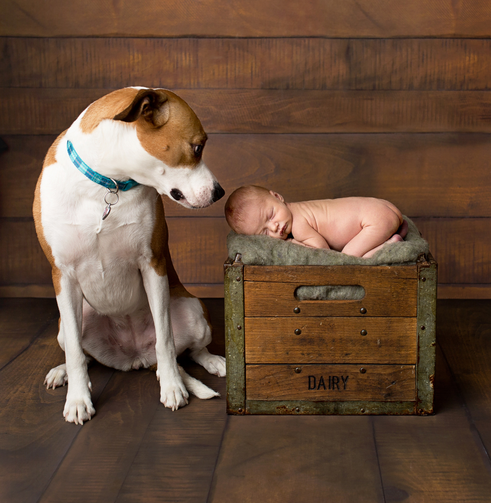 Babies with dogs, newborn and dog, funny baby and dog photos