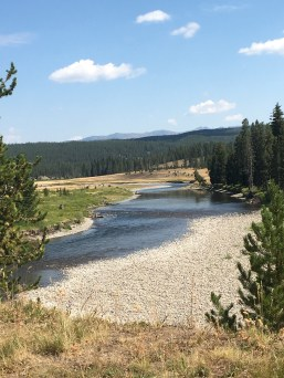 A glimpse of the Snake River flowing through Yellowstone.