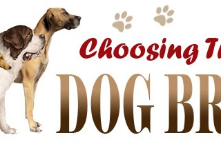 Choosing a Dog – Things Everyone Should Look For