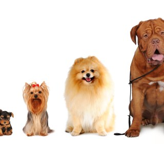 Which Dog Breed Is Best For You?