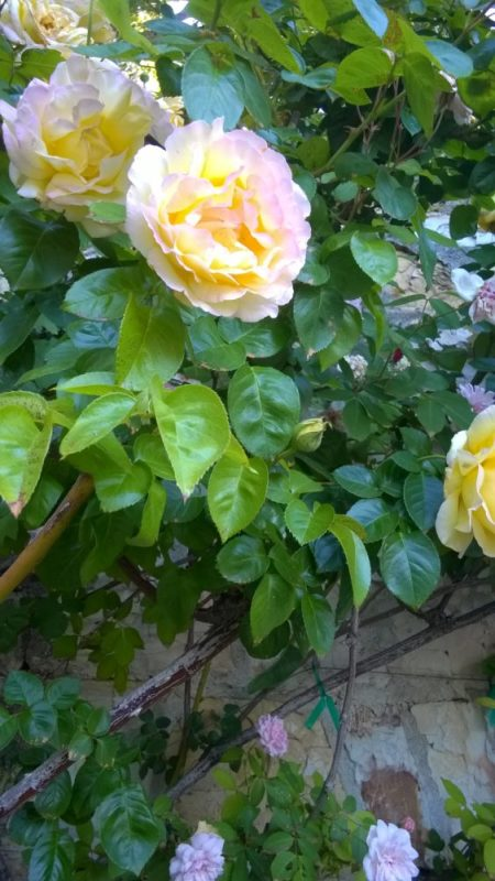 Holman Ranch Rose Patio