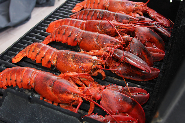 There Are Many Benefits From Eating Lobster