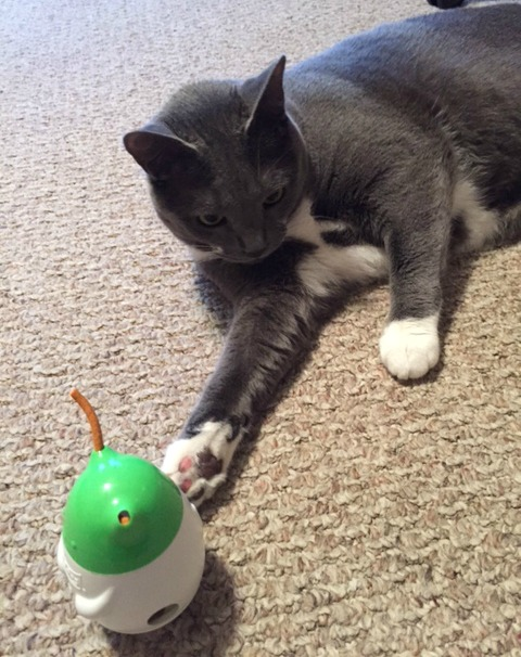 Friskies Pull 'n Play Combo Pack The Perfect Gift For Your Cat