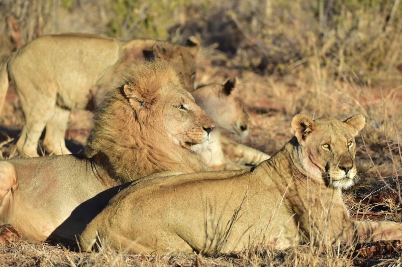 The Changing Face of South African Wildlife Safaris