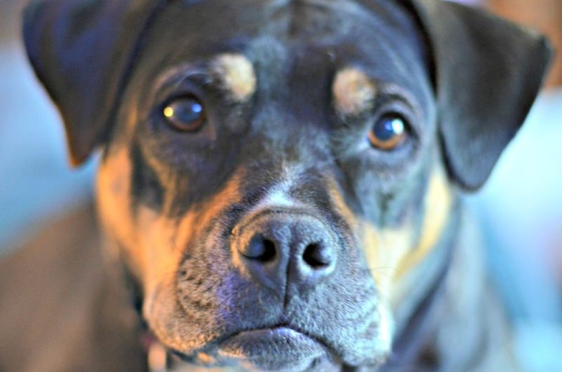 3 Facts On Why A Mixed Breed Dog Is A Great Choice