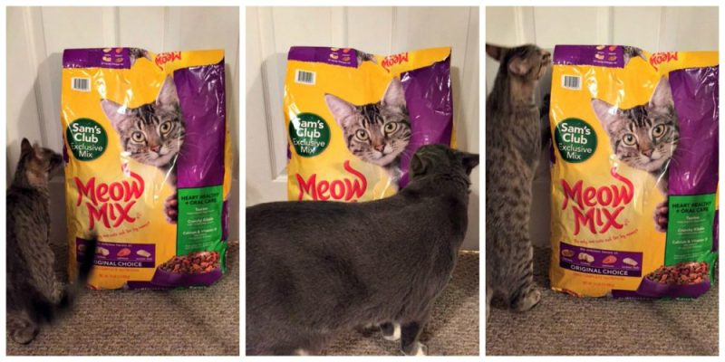 Help Cats All Over Get The Health They Deserve #ClubMeowMix