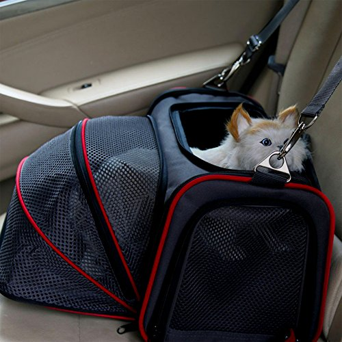 The Perfect Pet Carrier For All Your Pet Needs