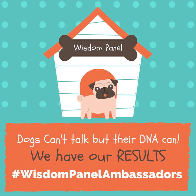 Wisdom Panel® Canine DNA Test