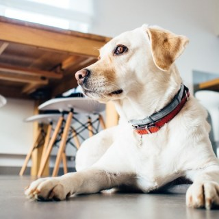 Tips For Pet Owners: Keeping Your Home Clean When You've Got Furry Friends