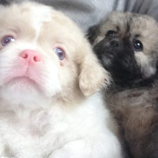 What Type of Puppy Is Right For You?