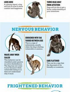 CANINE AGGRESSION WARNING SIGNS