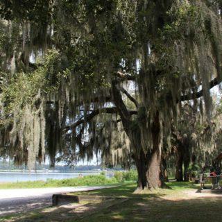Tips for Spending Spring Break in Ocala/Marion Florida