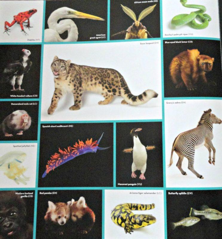Nat Geo Kids books animal ark