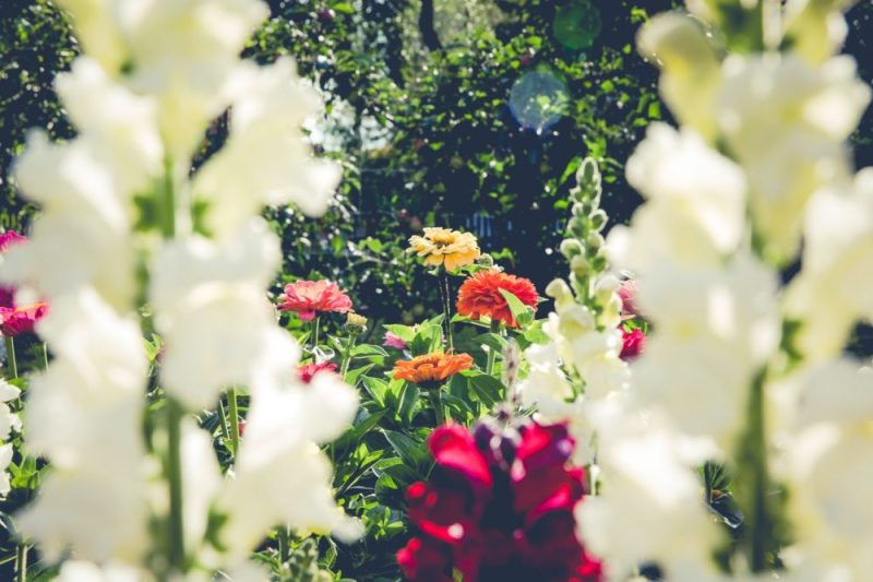 4 Beautiful Flowers You Can Easily Grow At Home