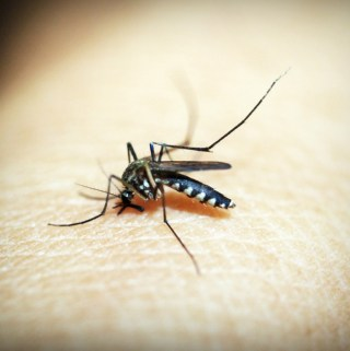Principles and Benefits of Integrated Pest Management