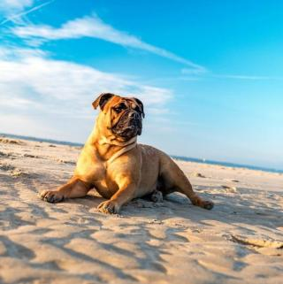 Traveling With Pets: What You Need To Know
