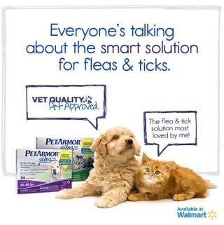 Let's Talk Fleas: PetArmor for Your Furbaby