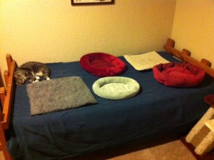 Zmije misses the catbeds