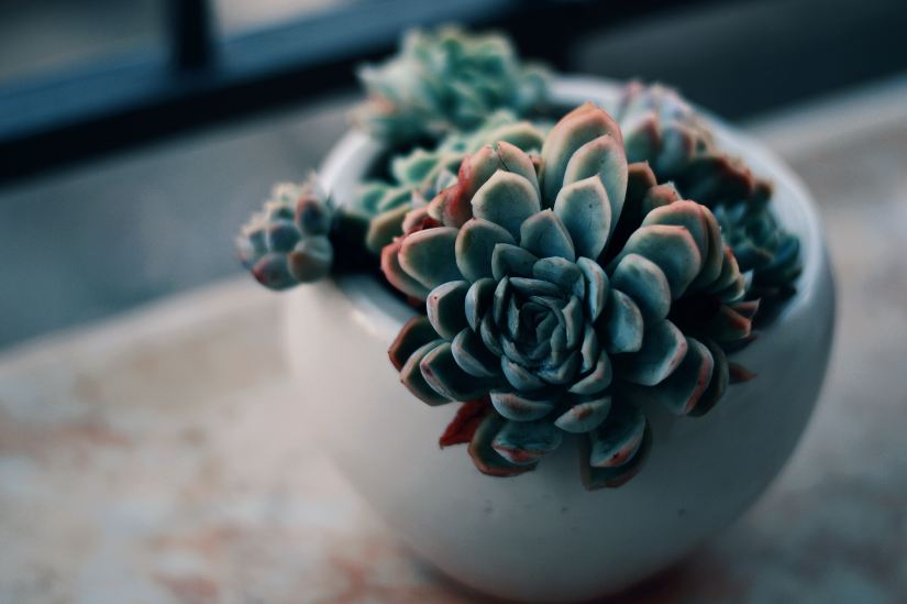 Succulent representing personal growth