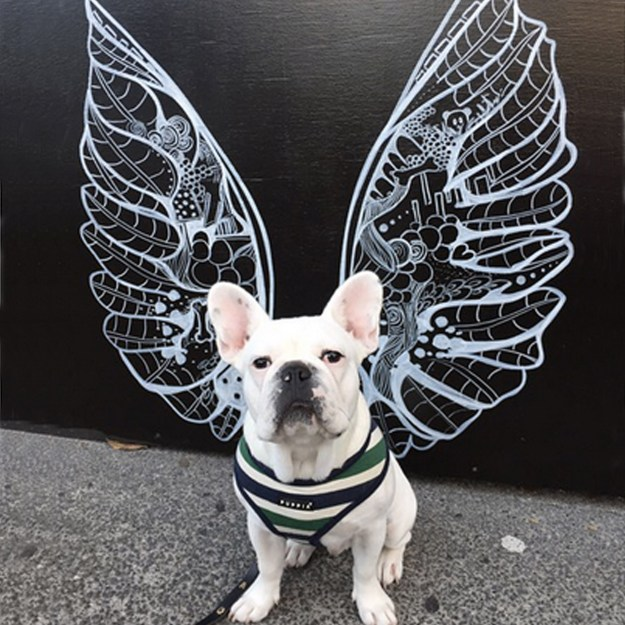 Frenchie in front of Kelsey Montague Art wings