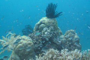 Snorkeling di Menjangan