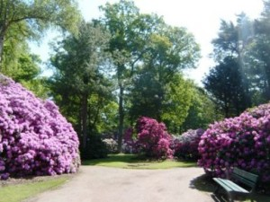 Bunga Rhododendron