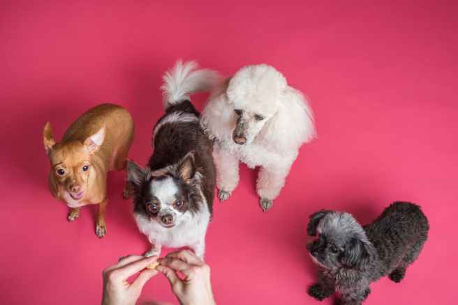 four dogs on pink background