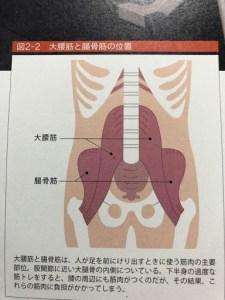 大腰筋・腸骨筋