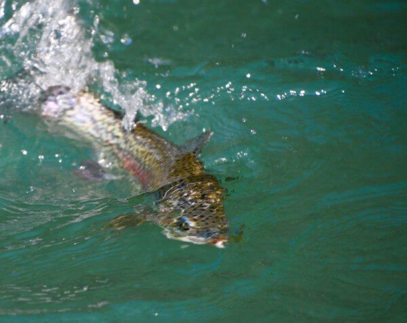 Kenai River Trout Fishing