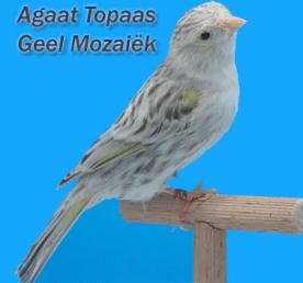 MosaicYellowAgateTopaz