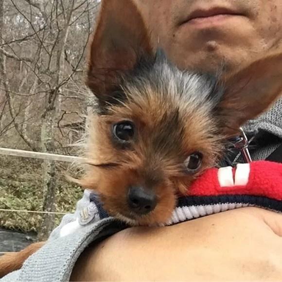 犬、連れてると「かわい〜」って言われて楽しい #軽井沢