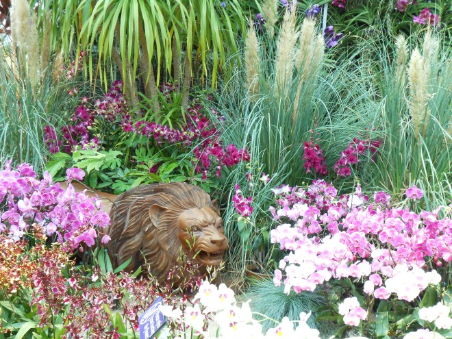 [A Lion amidst the Orchid displays]